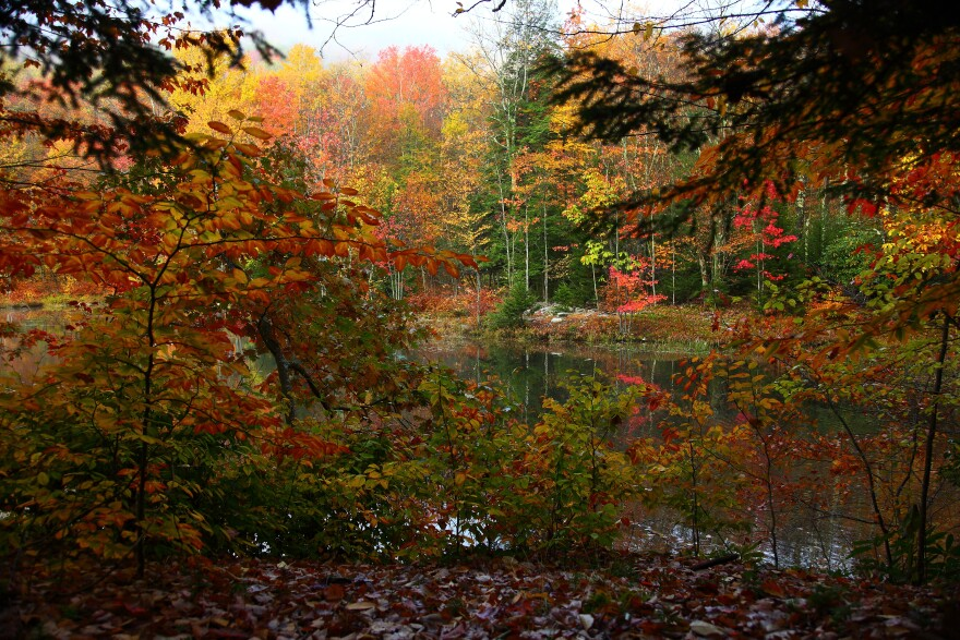 Fall foliage at Forest Lake, WV