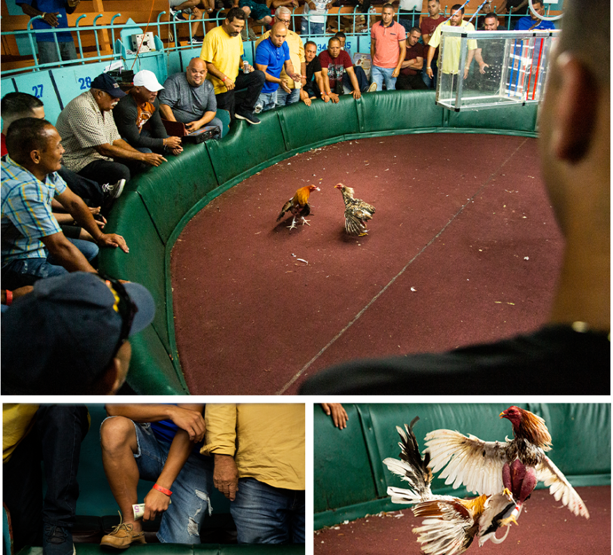 Gallera Borinquén, in Arecibo, Puerto Rico, is said to be one of the island's oldest cockfighting arenas.