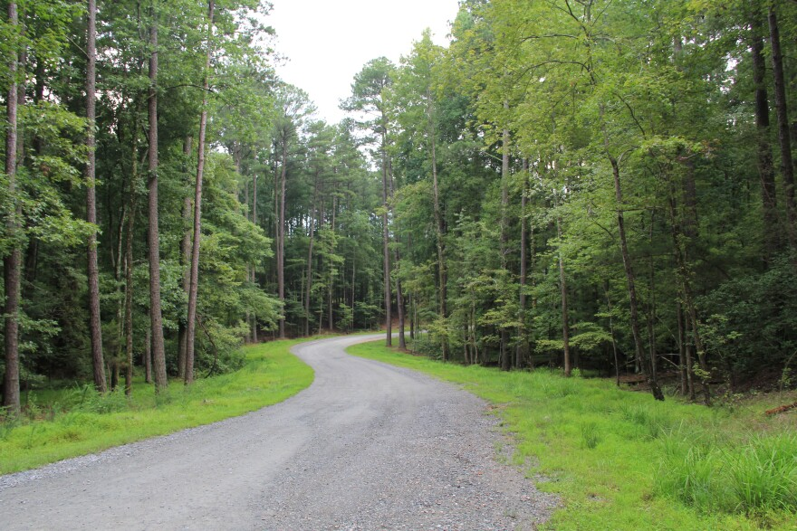 Umstead_State_Park_-_Road_and_trees_2014.jpg