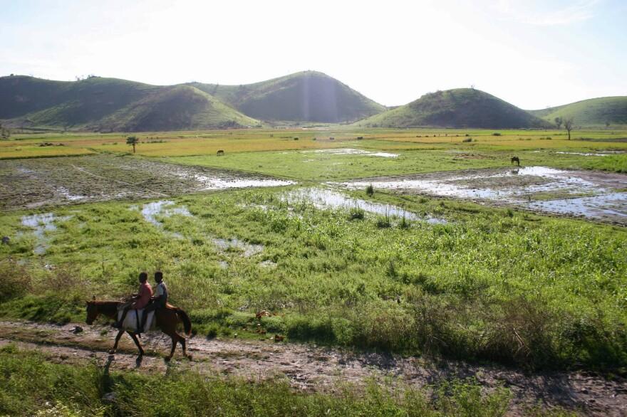 The rice fields below the village of Banatte.