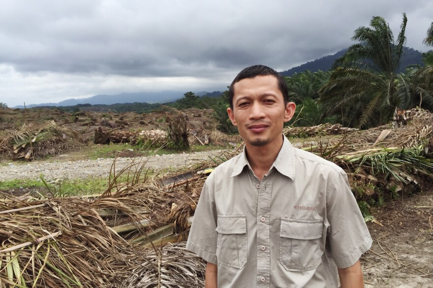 Environmental activist Rudi Putra looks out over the remains of an illegal palm oil plantation.
