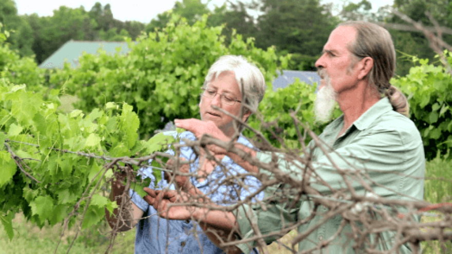 2-Laura-and-Ken-Dawson-discuss-the-resilience-of-native-grapes-at-Maple-Springs-Garden-in-Cedar-Grove-NC-Credit-Climate-LIstening-Project.png