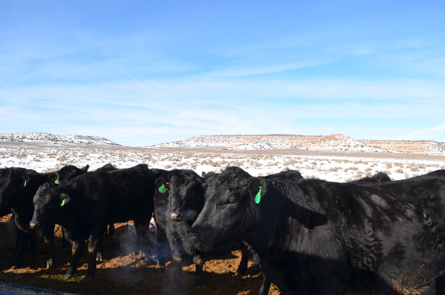 Photo of cows.