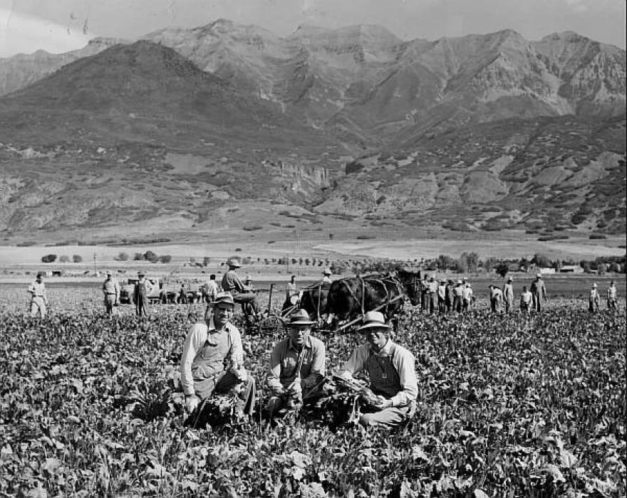 Photo of three men kneeling in the fields of an orchard in Orem Utah