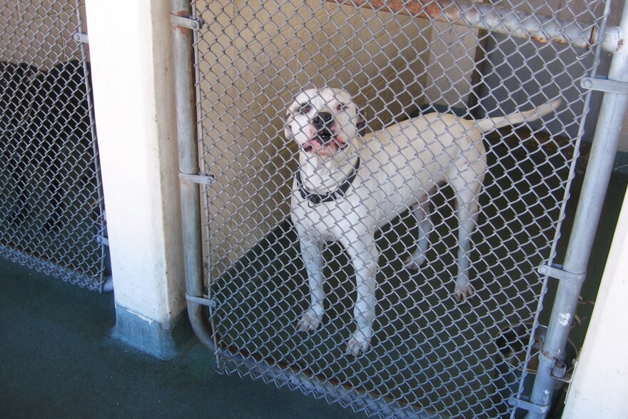 Miami-Dade County's animal shelter takes in more than 28,000 dogs and cats each year. In 2012, the county adopted a resolution that the shelter would become a no-kill facility. But even no-kill shelters can euthanize up to 10 percent of their animals.