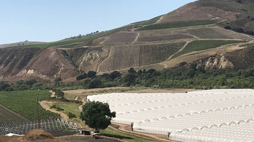 Fiddlestix Vineyard sits right next to John De Friel's cannabis farm's hoop houses.