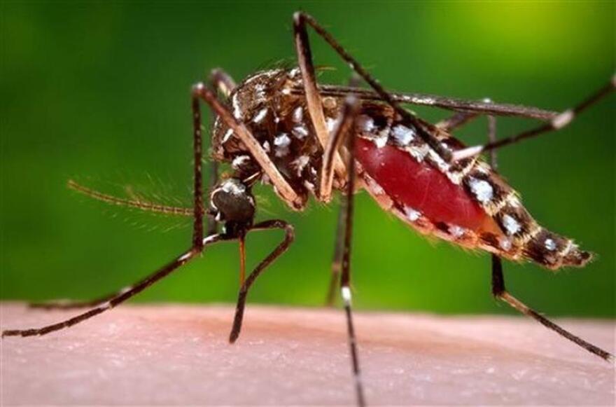 zika_mosquito_5_things.jpeg