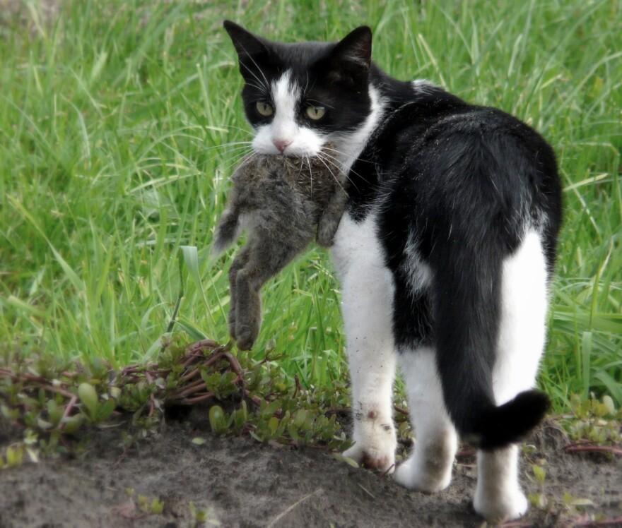 Cat_eating_a_rabbit.jpg
