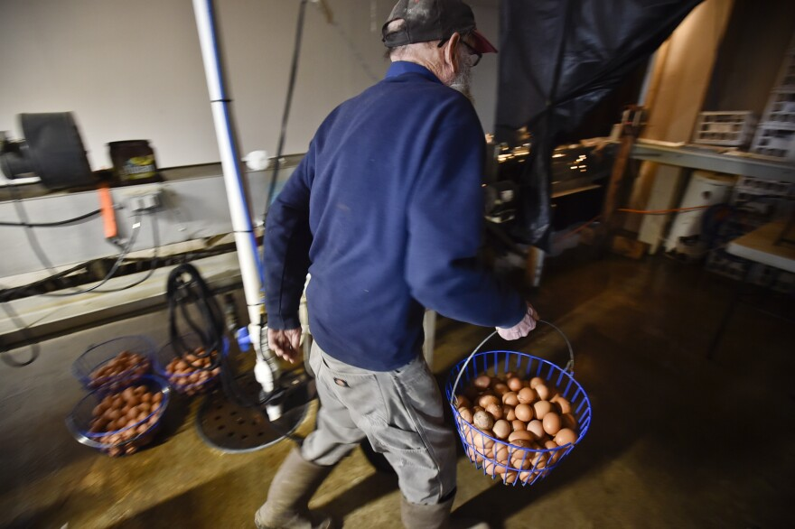 A photo of Hugh Spencer moving eggs from one of his chicken barns taken June 11, 2020.