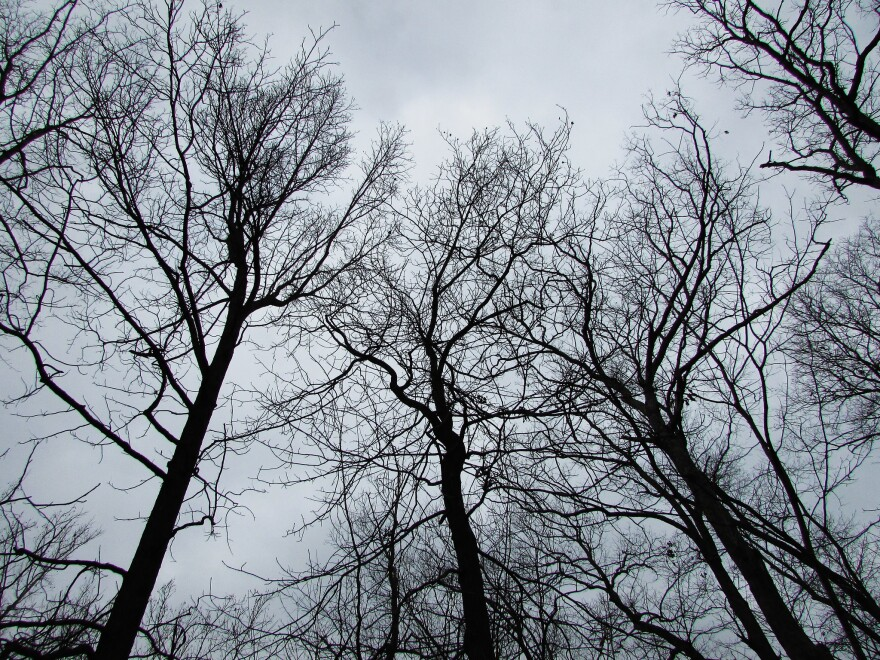 bare trees on a cloudy winter sky