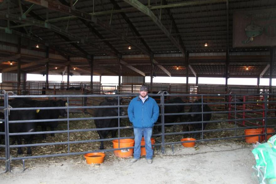 Elation's caretaker, Isaiah Shnurman, says the bull is treated like a star athlete. Elation spends most of his time in a large pen that has indoor-outdoor access. He exercises and has a mineral tub to lick and a large tire full of hay to snack on. A chiropractor visits once a month. And on Mondays and Thursdays, his semen is collected.