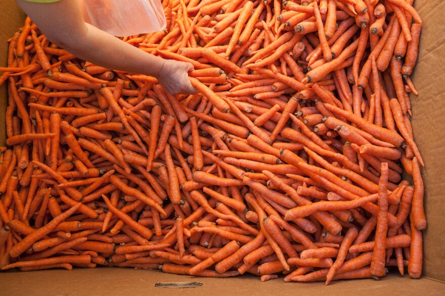 "Crooked carrots reclaimed by Ron Clark and his team at Better Harvests. We've shown you <a href=""http://www.npr.org/blogs/thesalt/2015/02/28/389511968/silly-saucy-scary-photos-show-the-many-faces-of-ugly-fruit"">entertaining examples</a> of malformed produce before. But ""the funny thing about ugly produce,"" Clark says, ""is that most of this produce is really beautiful. That's the irony."""