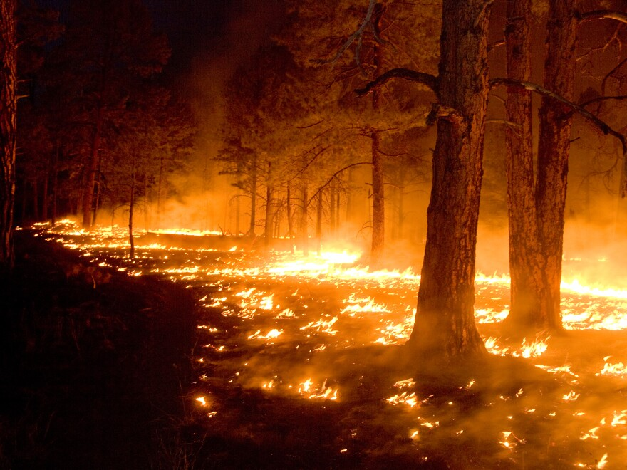 new mexico wildfire.jpg