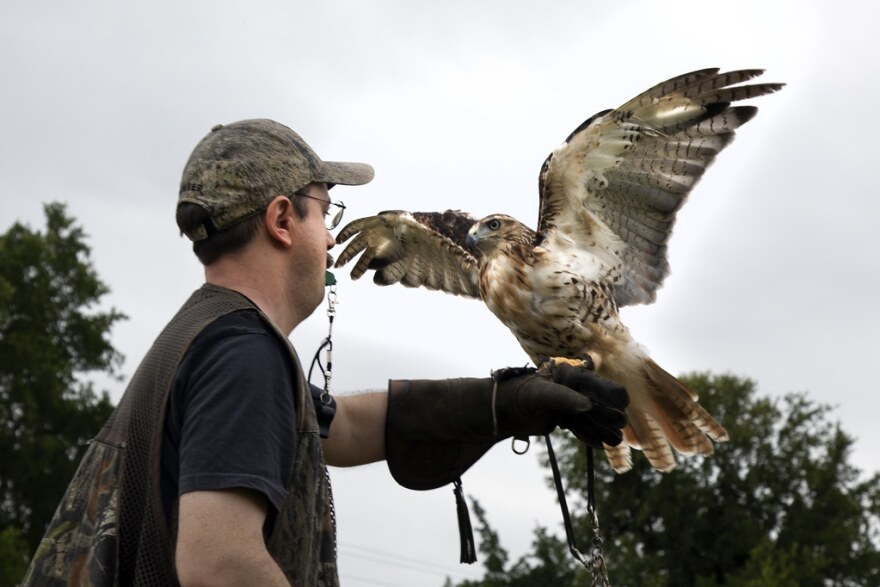 Max Shpak holds Caesar, a female red-tailed hawk