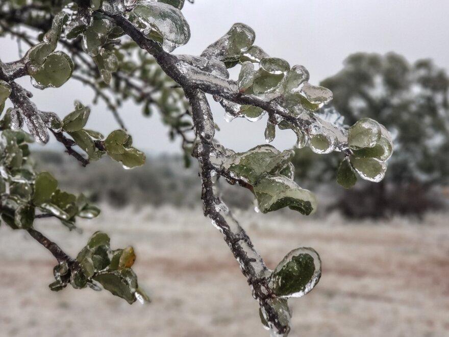 Frozen leaves.jfif