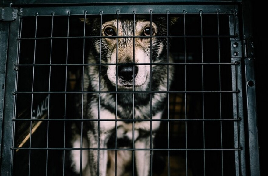 a white and black dog inside cage