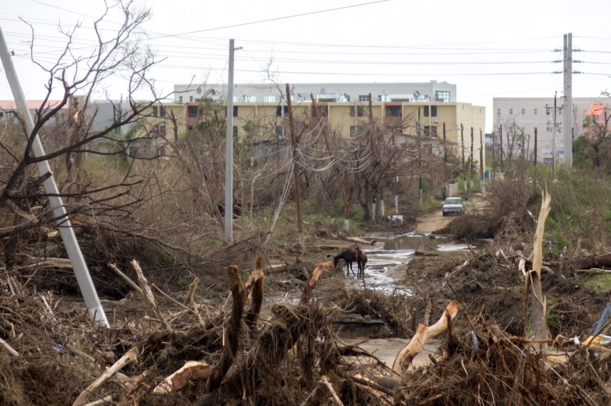 Trees were washed down a river during Hurricane Maria in the southern town of Guayama.