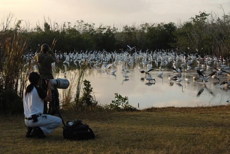 ENP birders egrets and wood storks.jpg