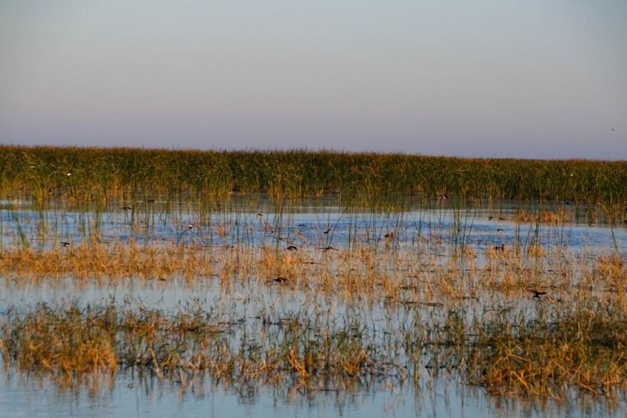 lake_o_birds.jpg