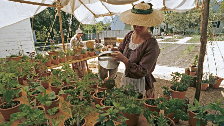 At Colonial Williamsburg's garden and nursery, which is open to guests, staff grow items that would have been found in gentry pleasure gardens: herbs, flowers and seasonal greens.