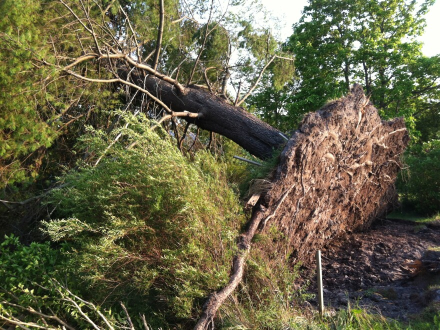 The weekend storms tore up a tree across the street from the West Virginia DOT division facility in Crawley.