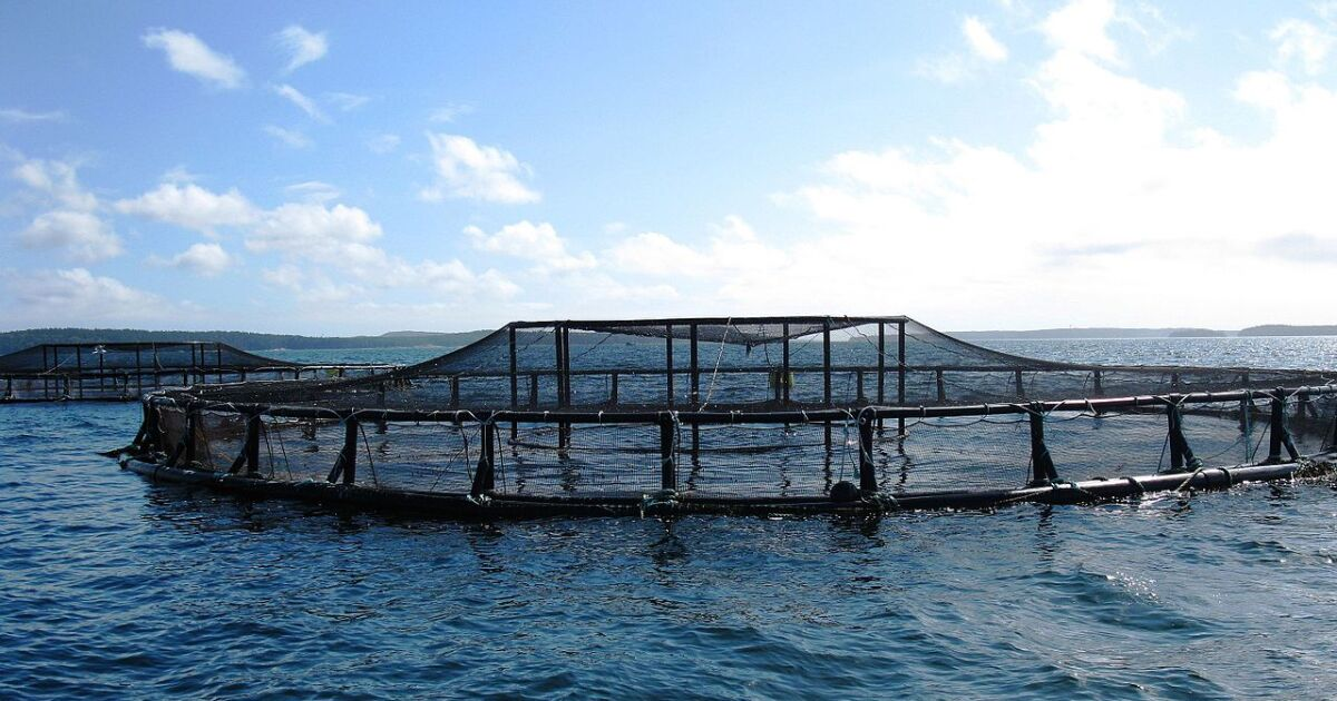 Rubio Introduces Legislation To Ease Path For Aquaculture Development In Federal Waters