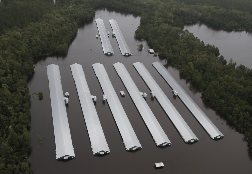 Chicken farm buildings are inundated Sunday with floodwater from Florence near Trenton, N.C.