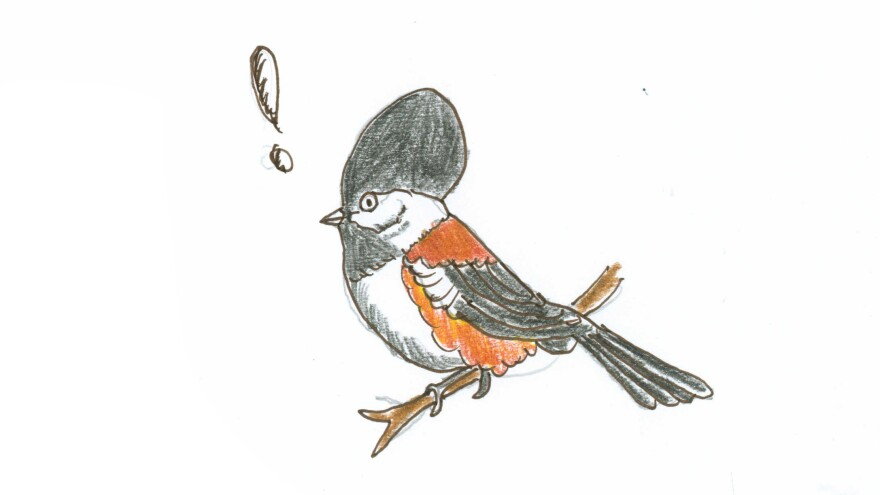 Every fall, the part of the chickadee's brain responsible for remembering where things are expands in volume by approximately 30 percent.