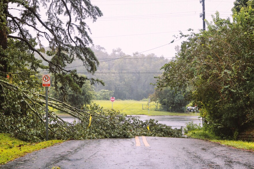 A roadway is blocked by a large tree branch.