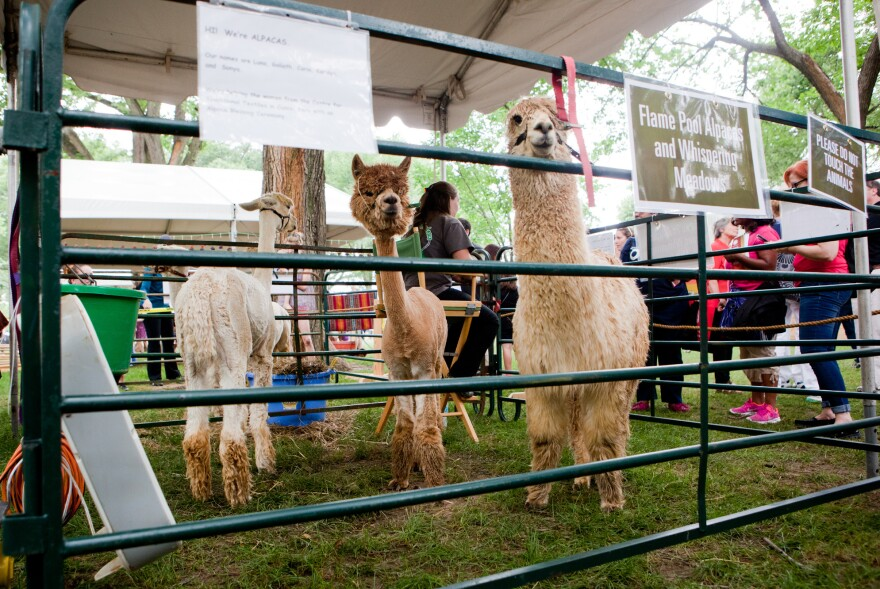 The Peruvians blessed this delegation, from Whispering Meadows Alpaca Breeders and Flame Pool Alpacas, during the first week of the Smithsonian Folklife Festival.