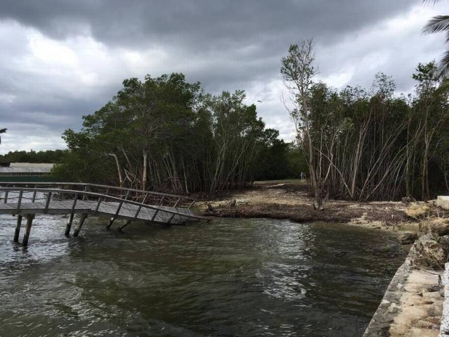 Architects Bernardo Fort-Brescia and Laurinda Spear were cited by county environmental regulators for illegally cutting down these mangroves after Hurricane Irma.