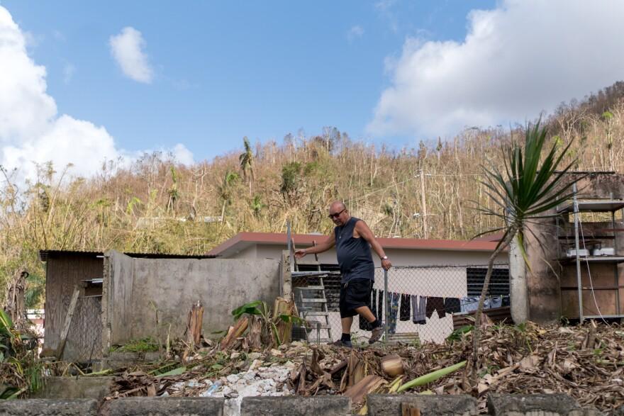 Rafael Medina Rios, 66, walks through his barren banana plantation behind his house in Cayey, Puerto Rico. The plants were damaged by Hurricane Maria.