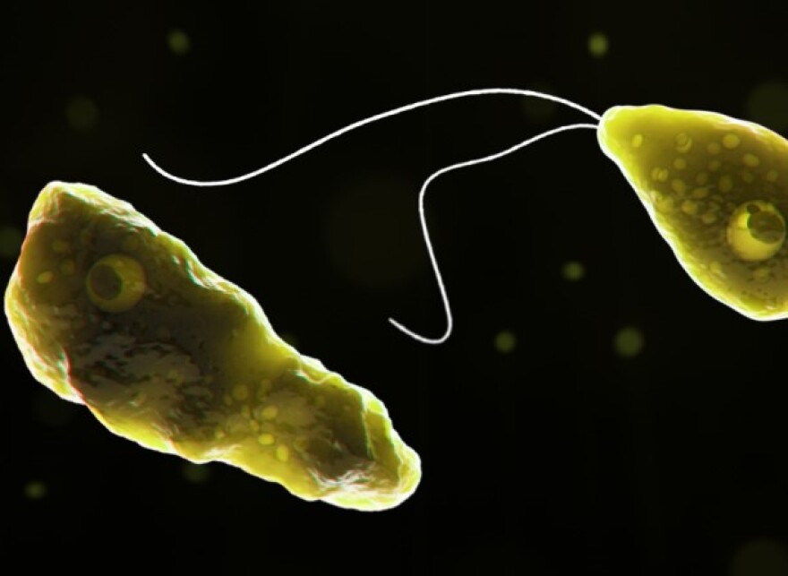 The microscopic amoeba, called Naegleria fowleri, is usually found in freshwater lakes, rivers and ponds and can cause an infection that destroys brain tissue and is usually fatal.
