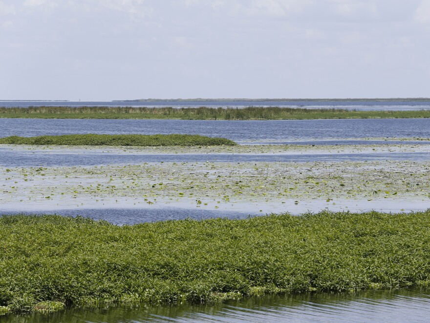 In Florida's Lake Okeechobee, huge blooms of blue-green algae have become an annual occurrence. The Army Corps of Engineers is testing methods based on wastewater treatment to remove the green slime, which can produce toxins that threaten drinking water supplies, local economies and human health.