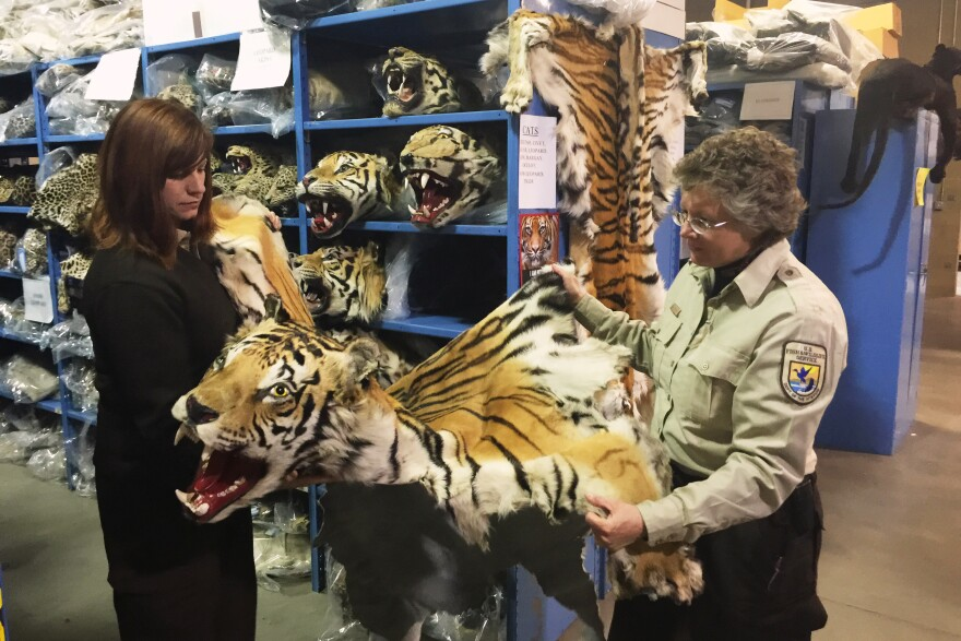 Coleen Schaefer (left) and Doni Sprague display a tiger pelt that was confiscated and is being stored at the National Wildlife Property Repository on the outskirts of Denver. Some 1.5 million items are being held at the facility. The Trans-Pacific Partnership, which is still under negotiation, would punish wildlife trafficking.