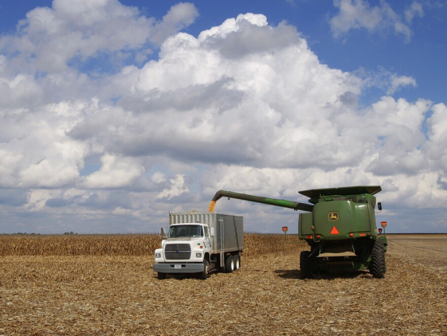 <p>Illinois farmers harvest corn crops near Monticello, Ill. An unseasonably hot summer likely damaged much of this year's corn crop, which means farmers may seek support through their crop insurance.</p>