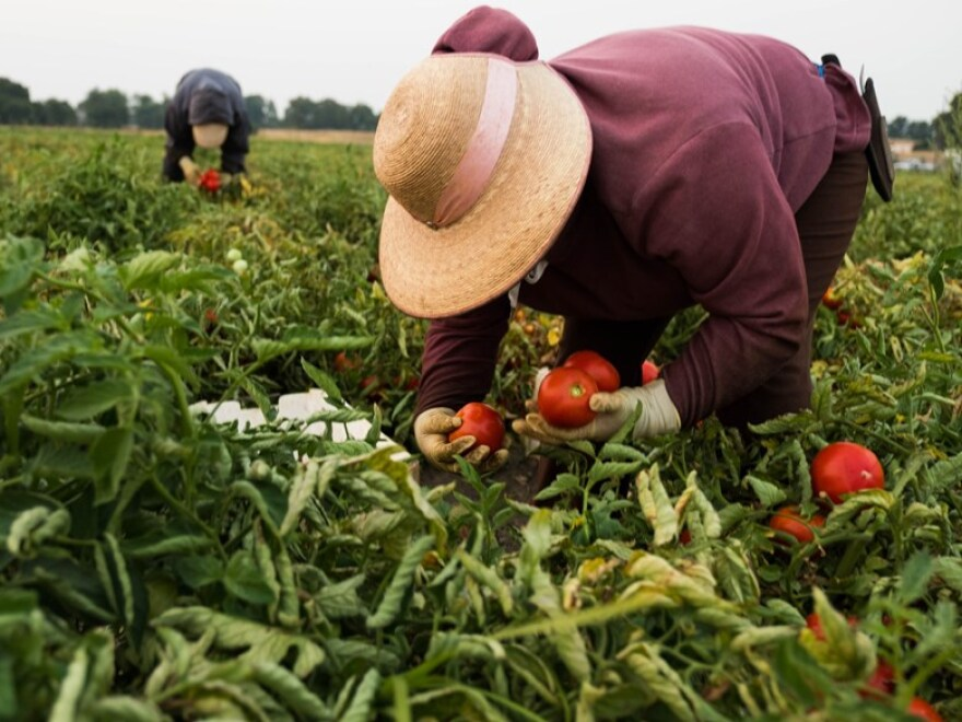 farmworker_-_nixon_cpr.jpg