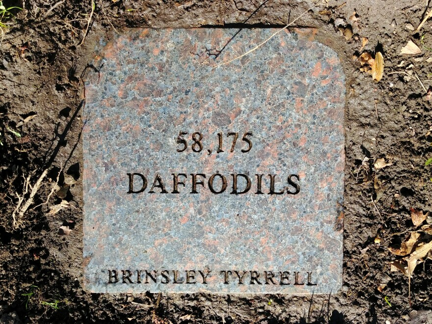 A photo of the plaque that was unearthed this year that honors Brinsley Tyrell and states the number of the daffodils.