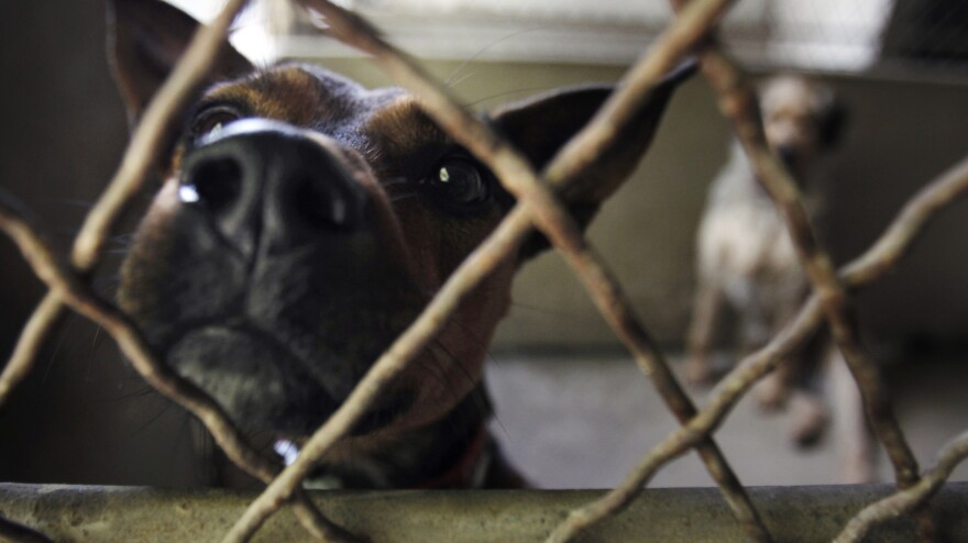Dogs wait to be adopted at the Animals Without Home shelter south of Paris in Montgeron, France, in August 2010. France is among the European countries with the highest number of abandoned pets during the summer months, when people take long vacations.