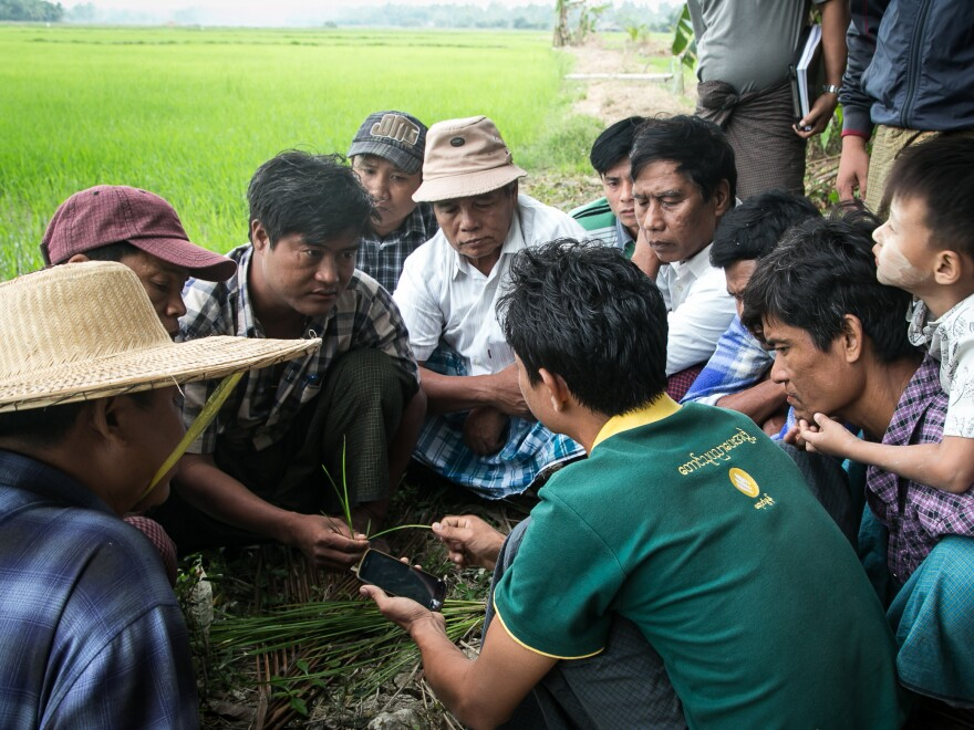 Farmers in the Irrawaddy Delta get a lesson in the Farm Advisory Services smartphone app, which can connect them with agricultural experts.