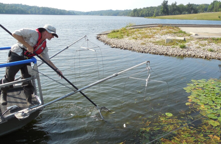 Dave Gullic, who works with the DNR's water quality monitoring section, nets a fish in Jefferson City's Binder Lake. The department samples fish tissues for mercury, as part of a monitoring process required by the EPA.
