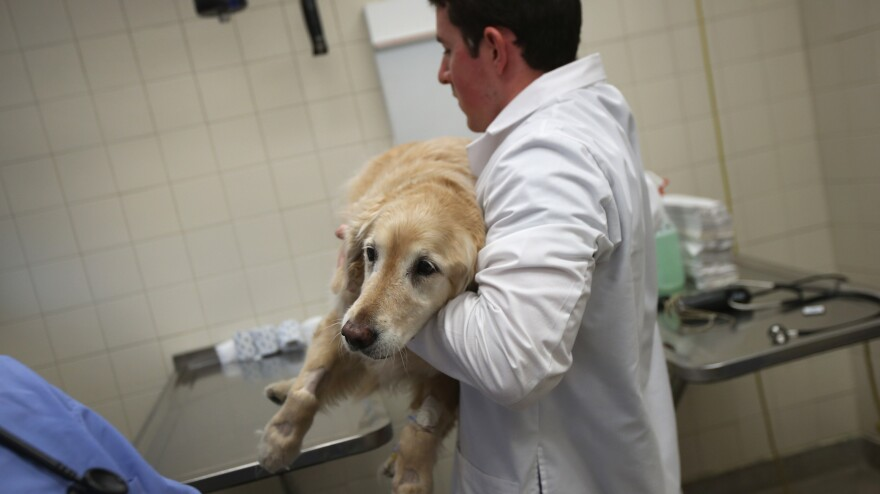 There are way more veterinarians than there is work for them to do, according to a recent survey by the American Veterinary Medical Association.