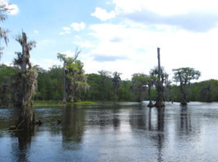 Wakulla Springs is one of the many outflows of the Floridan Aquifer.