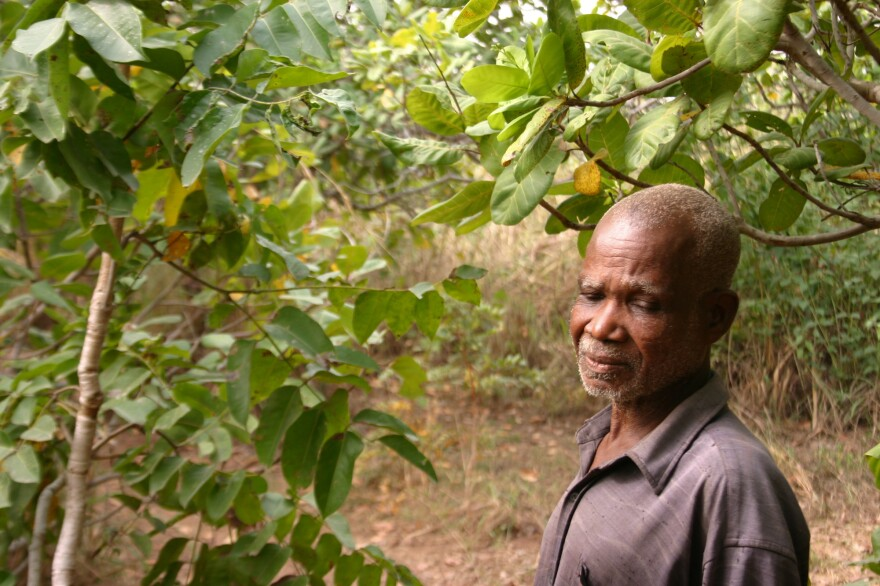 Emmanuel Kwame, who lost his sight to river blindness, in his cashew grove.