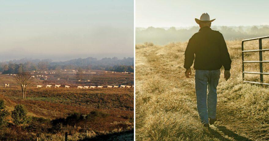 baldwin-beef-farms-caswell-county-north-carolina-4.jpg