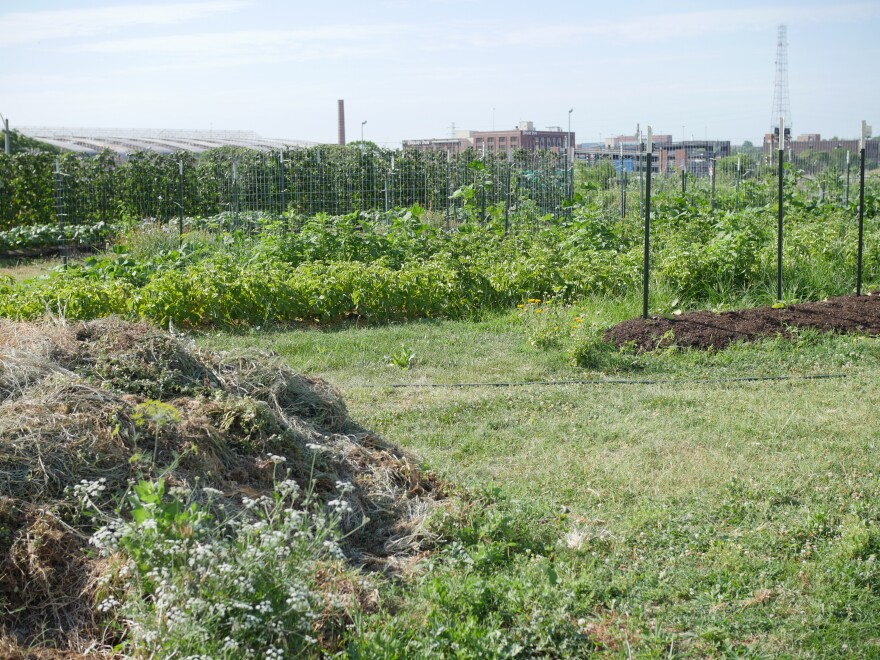 City Seeds is a 2.5-acre farm located just a few blocks north of Union Station.