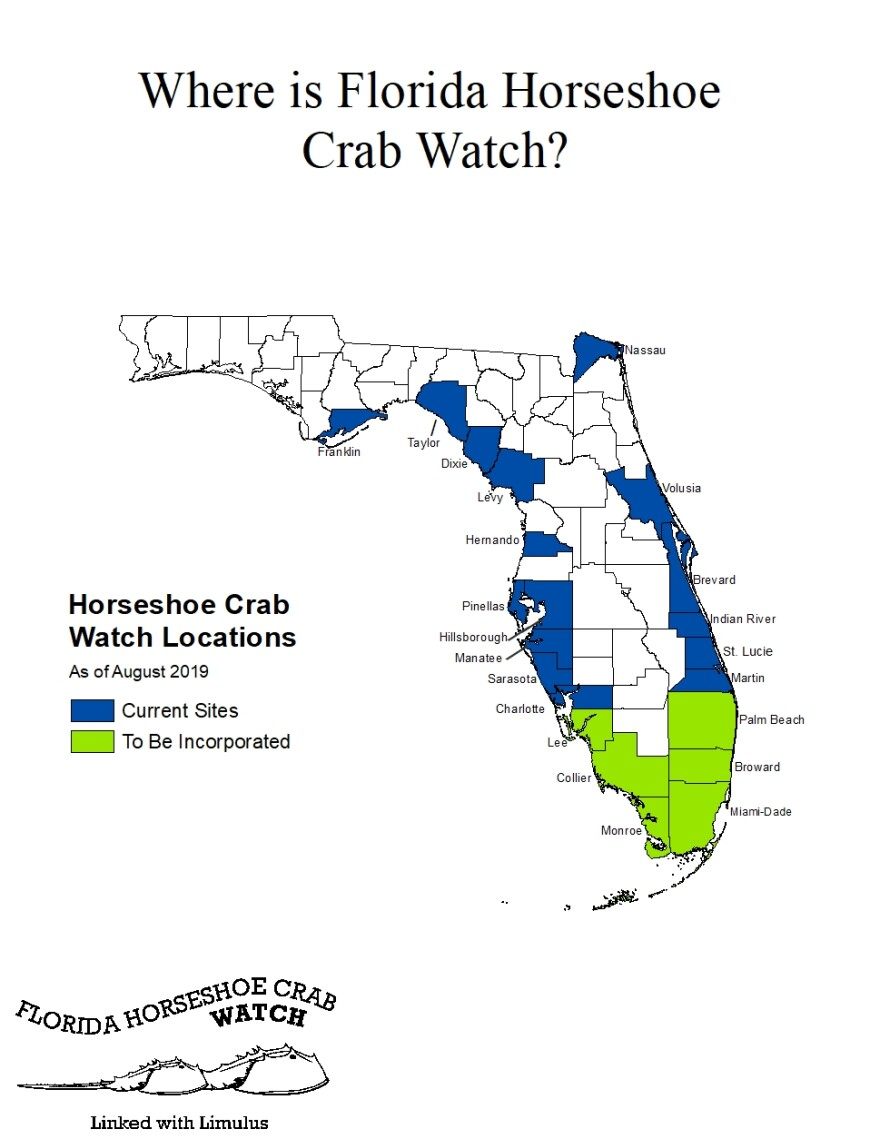 A map of Florida counties where volunteer programs count horseshoe crabs. Credit: FWC