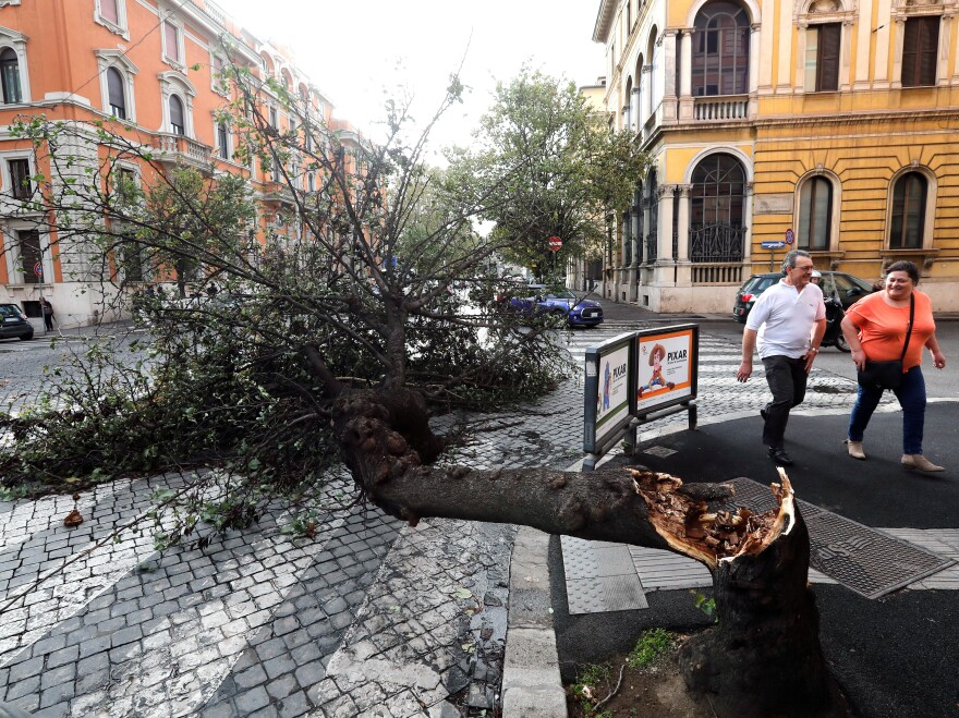 A felled tree taken down by strong winds is seen in downtown Rome.