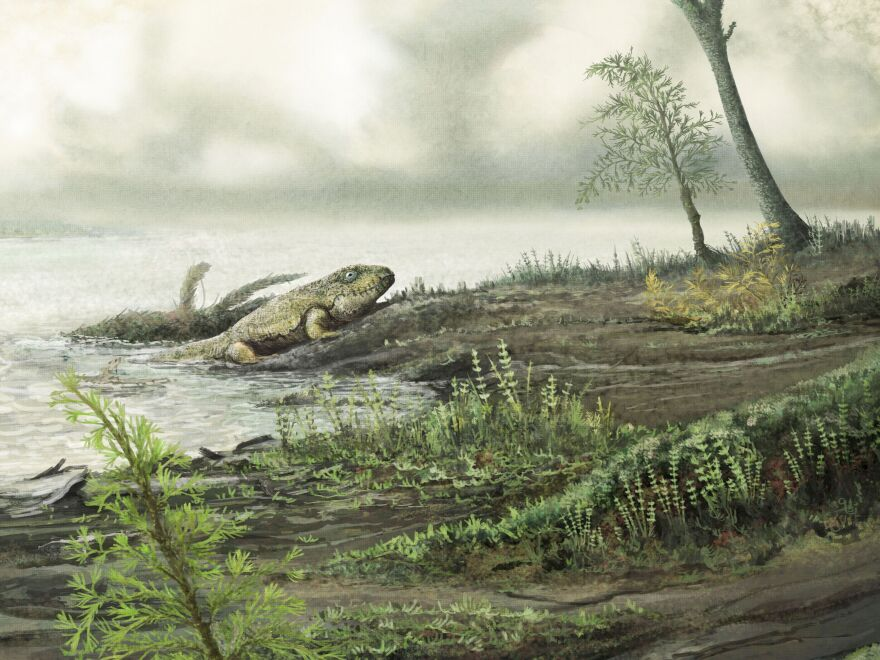 The ancestors of modern hospital superbugs may have lived in the guts of ancient land animals.