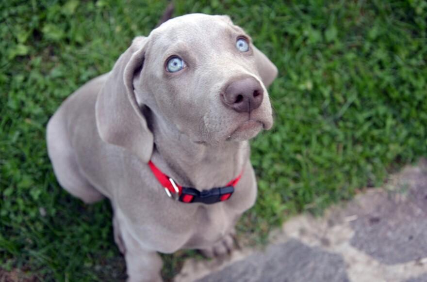 dog_puppy.jpg